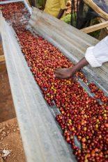 mbilma-cherry 155