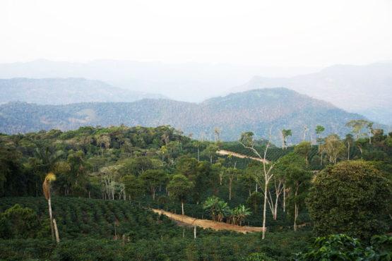 La Llama Java Coco Natural | Melbourne Coffee Merchants